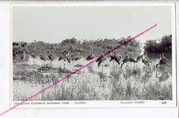 44813 - The Queen Elizaneth National Park Uganda - Marabou Storks - Uganda