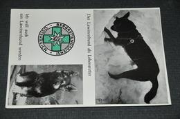 96  Der Bergrettungsdienst  Salzburg, Der Lawinenhund Als Lebensretter - 1977 - Hunde