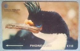 229CFKA Penguin - Falkland Islands
