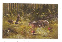 Müller August- Illustrateur -Chasse - Lièvres-lapin- Champignon (C.3176) - Mueller, August - Munich