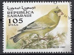 Saharaui 1997 Birds Uccelli : Fringuello (Verdone Comune) - Chioris Chioris - Nuovo CTO - Sparrows