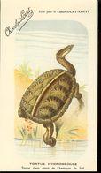 Postcard, France, Printed By Chocolat-Louit, Snake-necked Turtles -Tortue Hydromeduse 14x7,5cm, Unused - Schildpadden