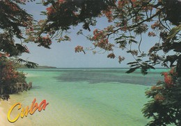 CARTOLINA - POSTCARD - CUBA - HOLGUIN - PLAYA GUARDALAVACA - Cartoline