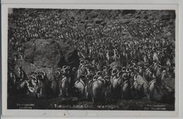 Isla Pinguin - Territoria Santa Cruz - Photo: Kohlmann No. 211 - Argentine