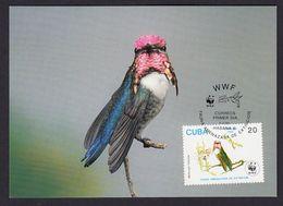 CUBA 1992 MAXIMUM CARD BIRDS - HUMMINGBIRDS (Mellisuga Helenae) - Hummingbirds