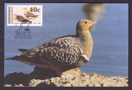 BOPHUTHATSWANA 1990 MAXIMUM CARD BIRDS - Namaqua Sandgrouse (Pterocles Namaqua) - Pájaros