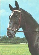 HORSES / PFERDE / CHEVAUX /    POSTCARD  USED     ( H  4658 ) - Pferde