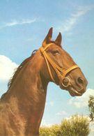 HORSES / PFERDE / CHEVAUX /    POSTCARD  UNUSED     ( H  4672 ) - Pferde