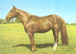 HORSES / PFERDE / CHEVAUX /    POSTCARD  UNUSED     ( H  4675 ) - Pferde