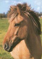 HORSES / PFERDE / CHEVAUX /    POSTCARD  UNUSED     ( H  4677 ) - Pferde
