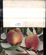 144481,Essen Bäume Zweig Pfirsichbaum Pfirsichzweig Früchte Obst - Küchenrezepte