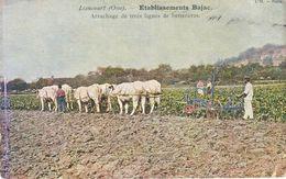 60 - LIANCOURT - Etablissements Bajac - Arrachage De Trois Lignes De Betteraves - Liancourt