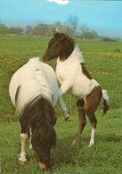 HORSES / PFERDE / CHEVAUX /    POSTCARD  UNUSED     ( H  4682 ) - Pferde