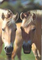 HORSES / PFERDE / CHEVAUX /    POSTCARD  UNUSED     ( H  4692 ) - Pferde