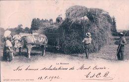 La Moisson, Récolte Du Seigle, Attelage De Boeufs (2026) Pli D'angle - Attelages