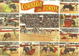 BULL  Postcard Used   ( Z 1064 ) - Stieren