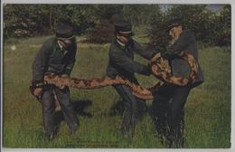 Handling A Python New York Zoological Park - NY - New York