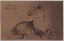 Felis Leo - Löwin Lionne Lioness Leeuwin - Lions