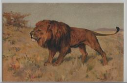 Lion Löwe - Künstlerkarte No. 122 - Lions