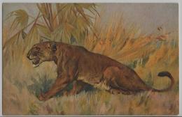 Lion Löwe - Künstlerkarte No. 88 - Lions