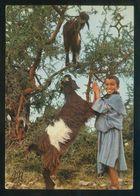 Marruecos. *Petit Berger Du Souss* Ed. Jeff Nº 5186B. Nueva. - Marruecos