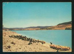 Marruecos. *Immouzer Du Kandar. Le Lac Daeït Aoua* Circulada 1978. - Marruecos