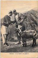CPA Albanie Albanese Albania Type Chèvre Circulé - Albania
