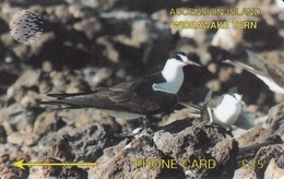 Ascension - Wideawake Tern, CN:3CASD, 4.600 Tirage ,used - Ascension (Insel)