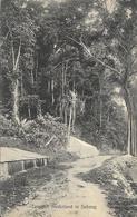 Philippines, Indes Néerlandaises: Tropisch Nederland Te Sabang - Edition Jean Alberti, Carte Non Circulée - Philippines