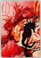 52724810 - Seepferdchen - Poissons Et Crustacés