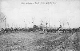 ¤¤   -  AUSTRALIE  -  SYDNEY  -  Attelages Australiens  -  Boeufs   -  ¤¤ - Sydney