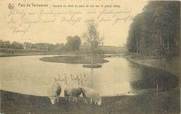 D1091 Parc De Tervueren Moutons - Andere