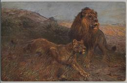 Löwen Lions - Paul Meyerheim Collection Moderne Meister - Tuck's Post Card - Lions