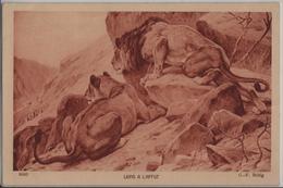 Lions A L'affut - Löwen In Lauerstellung - G.-F. Rötig - Lions