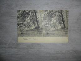 Bouwel  :  Dans Le Parc Du Château  -  Stéréoscopique - Grobbendonk