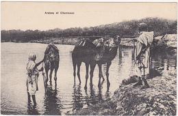 Maroc / Morocco - Arabes Et Chameaux / Années 30 - Maroc