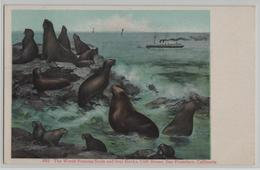 The Worls Famous Seals And Seal Rocks, Cliff House, San Francisco, California - 1011 - Robben - San Francisco