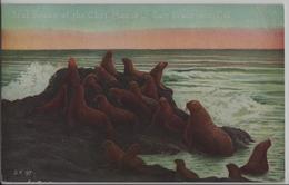 Seal Rocks At The Cliff House - San Francisco California - Robben - San Francisco