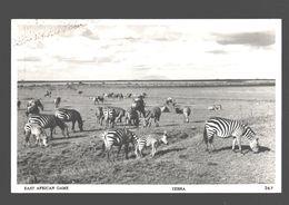 East African Game - Zebra - Photo Card Pegas Studio - Nairobi - Cebras