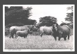 East African Game - Black Rhinoceros - Photo Card Pegas Studio - Nairobi - Rinoceronte