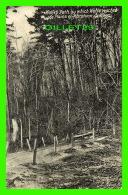 QUÉBEC - WOLFES PATH BY WICH WOLFE RESCHED THE PLAINS OF ABRHAM, QUEBEC IN 1907 - - Québec - La Cité