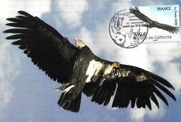 2009 - BIRDS OF PRAY - CALIFORNIAN CONDOR - Maximumkarten