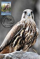 2009 - BIRDS OF PRAY - SAKER FALCON (Falco Cherrug) - Maximumkarten (MC)