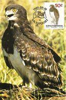 1989 - BIRDS OF PRAY - SHORT-TOED SNAKE EAGLE (Circaetus Gallicus) - Bophuthatswana