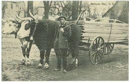 MAHONE BAY - Nova Scotia - Ox Team - Charette à Boeufs - Petit Métier - Unclassified