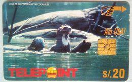 Sea Lions S/20 - Peru