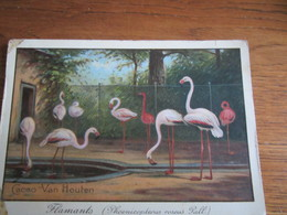 FLAMANTS     PUBLICITE   CACAO VAN HOUTEN - Vögel
