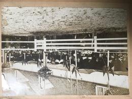 Oude Albumine Foto Gent Photo Gand H Geirland Soldaten Soldats Militaires Caserne Cheval ... - Oud (voor 1900)
