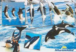 Animal Marin        H88        Marineland - Altri