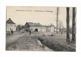 70 -  VELOTTE ( Hte-Saône ) - Les Moutons Au Pâturage - France